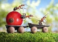 Ant tales1