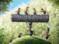 Ant tales4