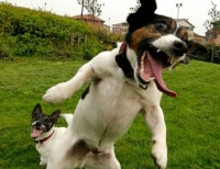 Funny-animals-making-funny-faces-016